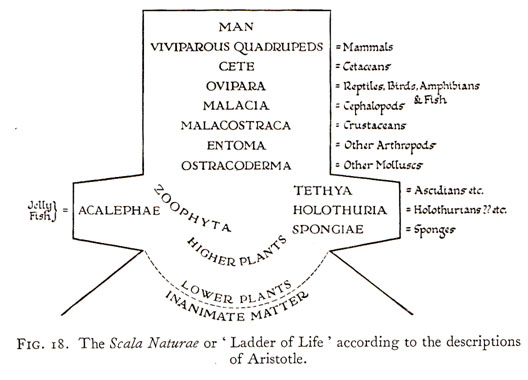 Article Science of the State According to Aristotle